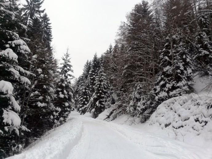 Wald-voller-Schnee Winterwonderland